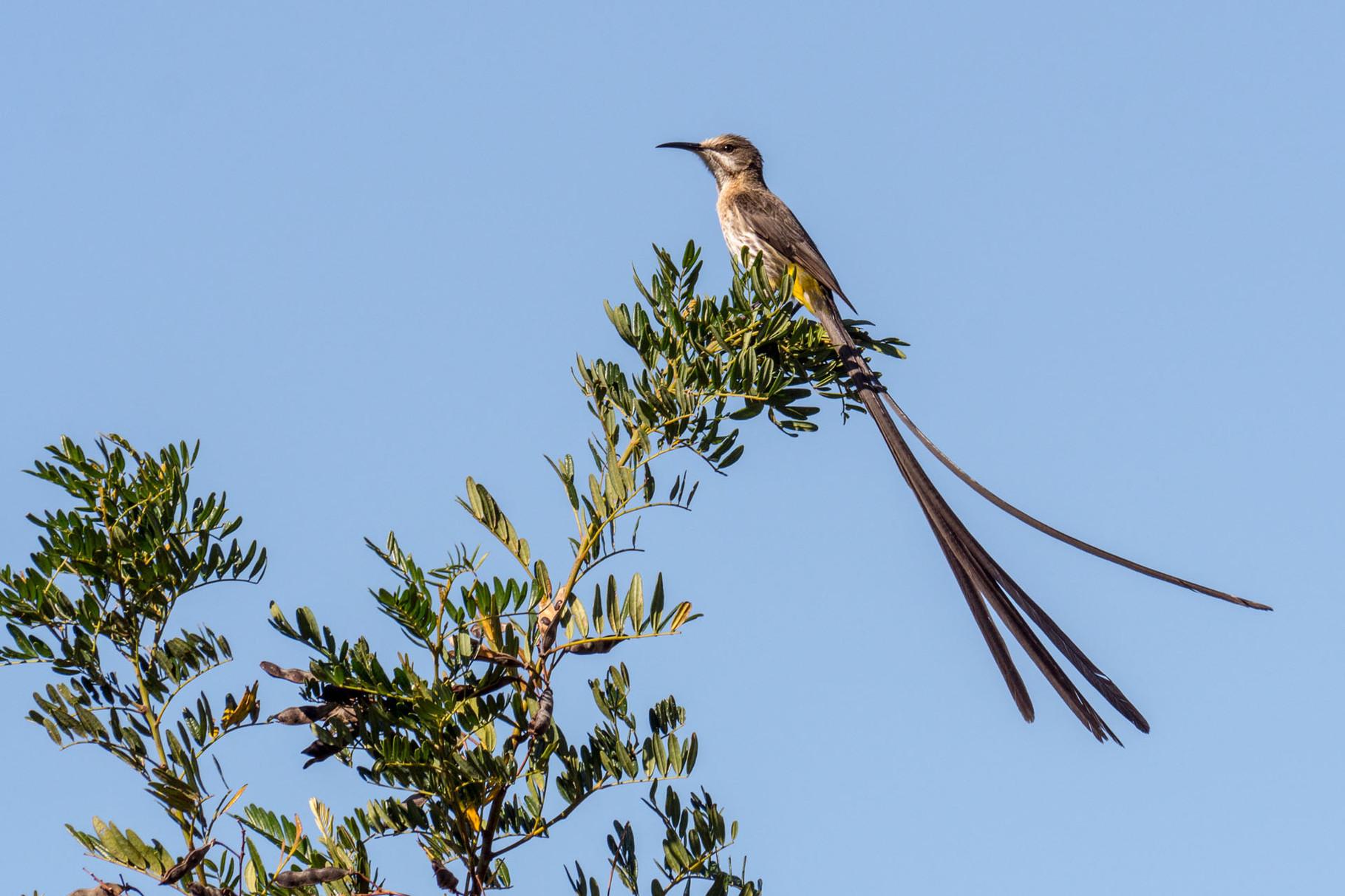 Bird, Table mountain, Cape Town