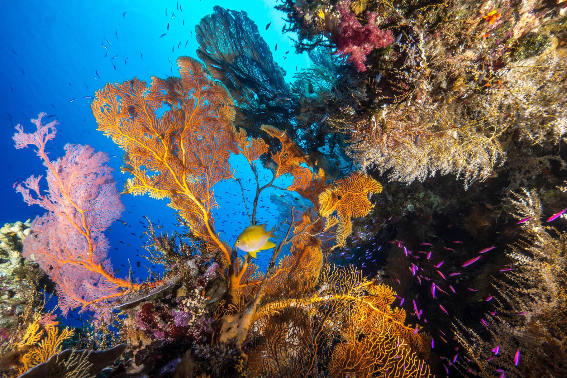 Reef scene, Lifou