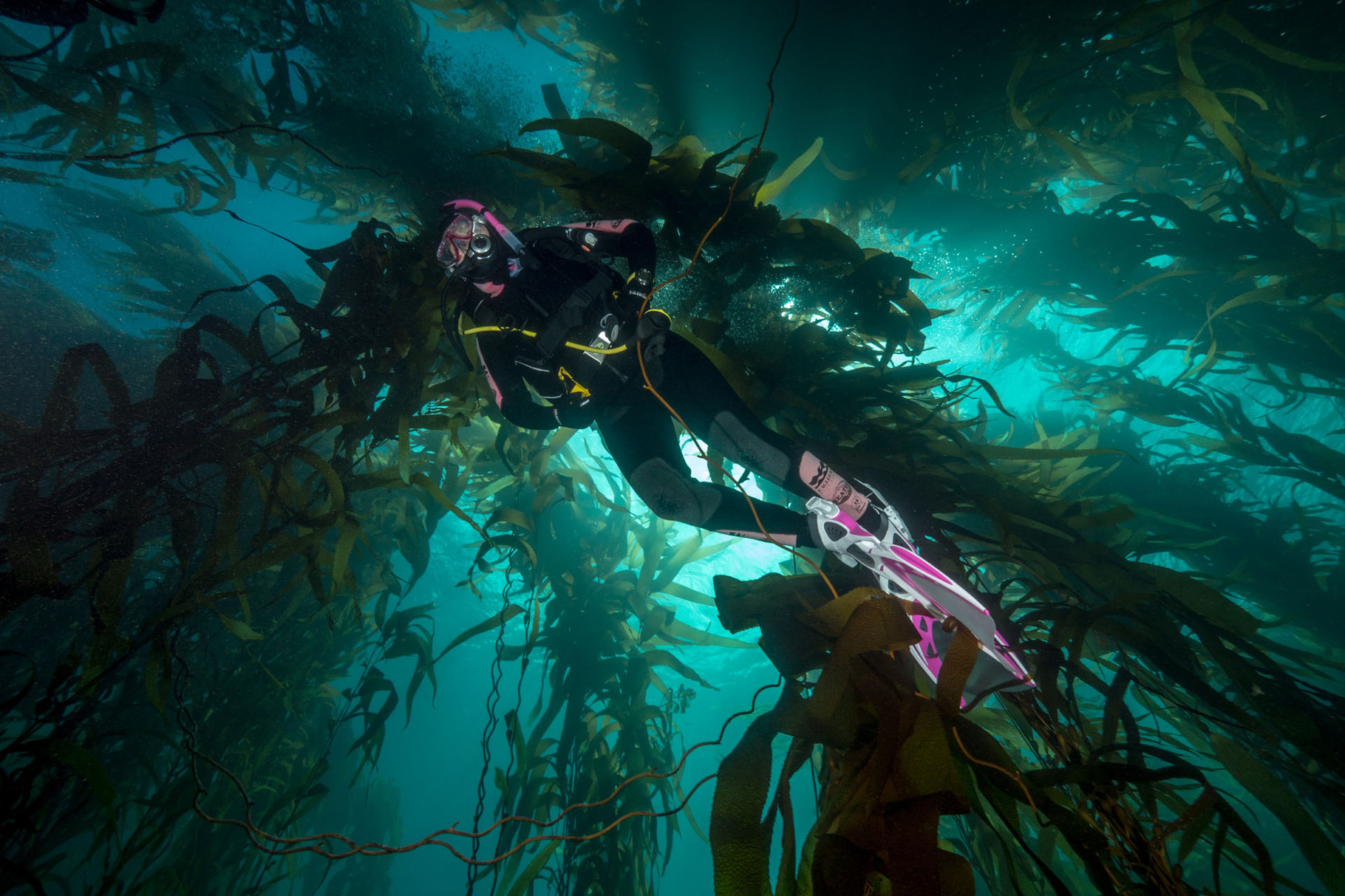 Giant kelp forest (up to 20m high)
