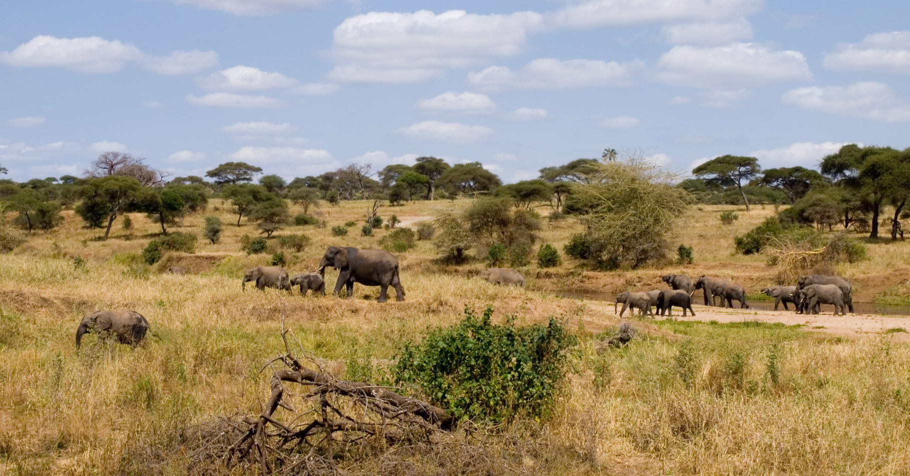 Elefants [Serengeti, Tanzania, 2012]