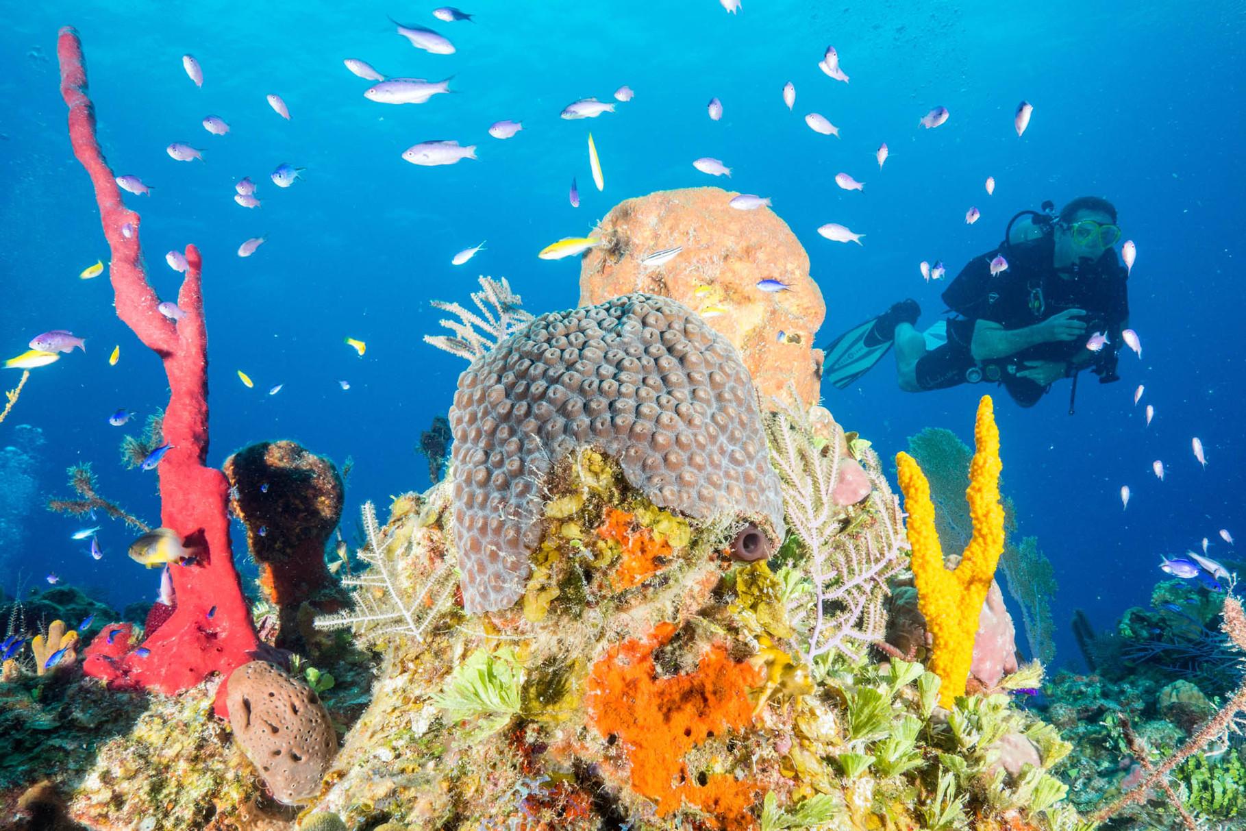 Razorback reef [Bahams, 2014]