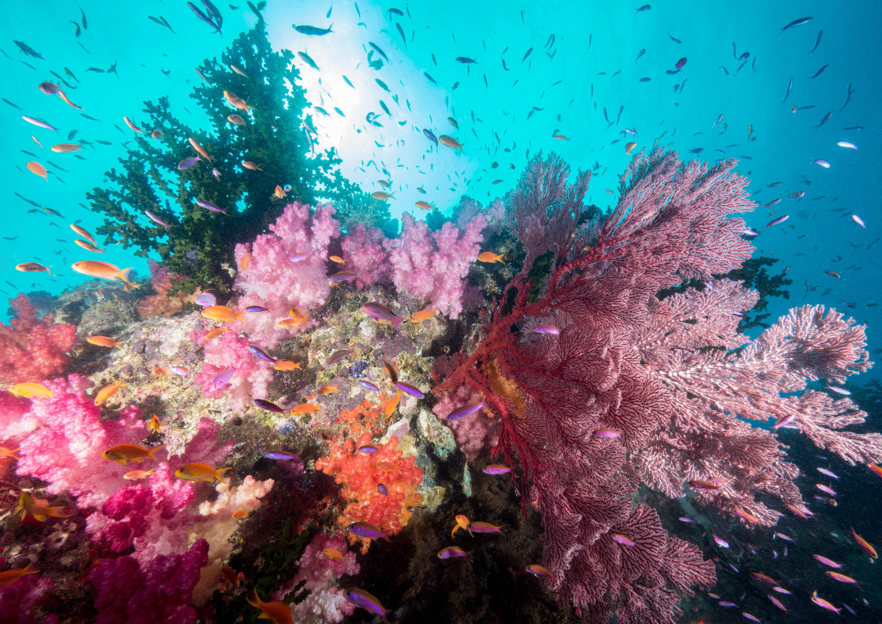 Colorful softcoral pinnacles [Fiji, 2014]