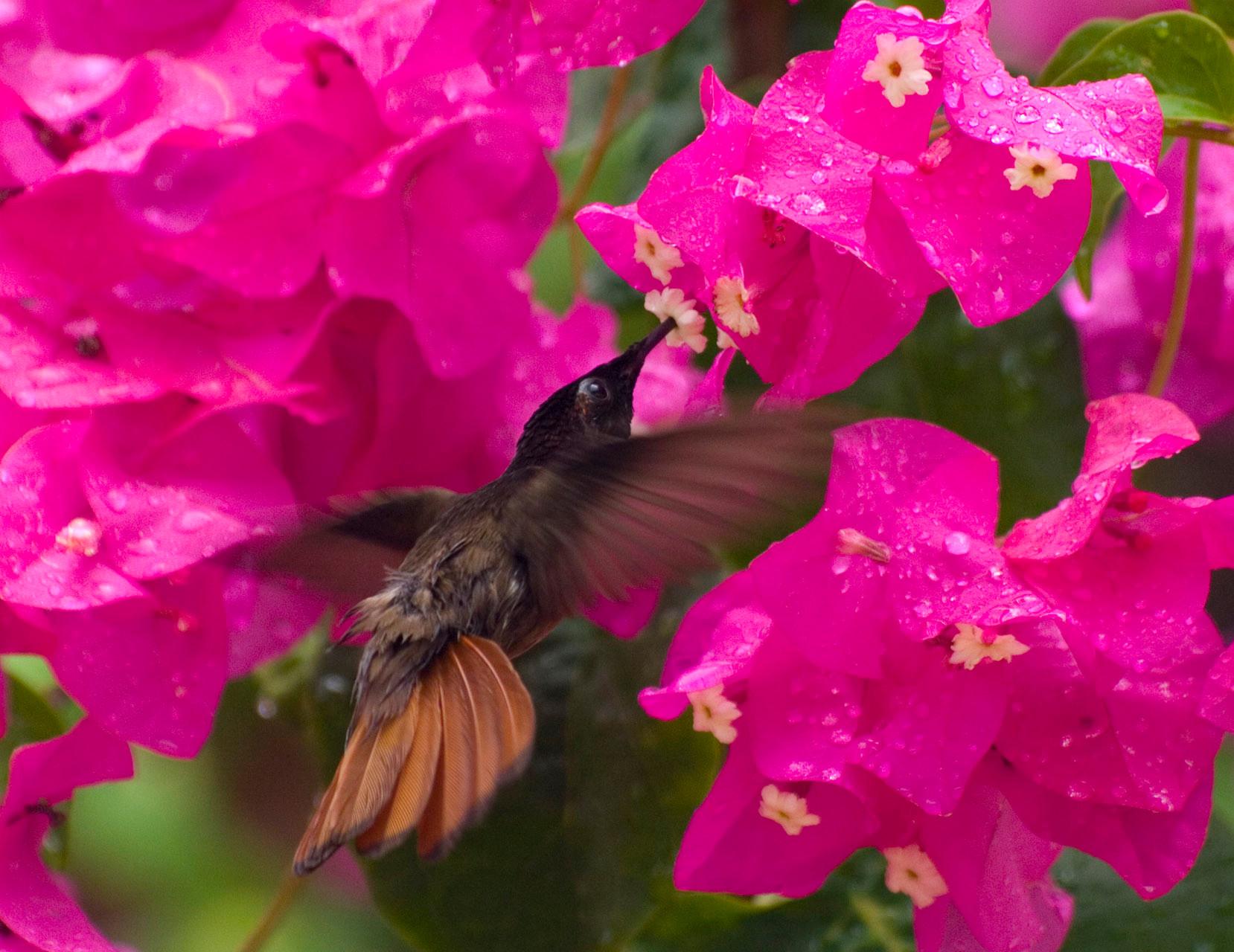 Kolibri [Venezuela, 2009]