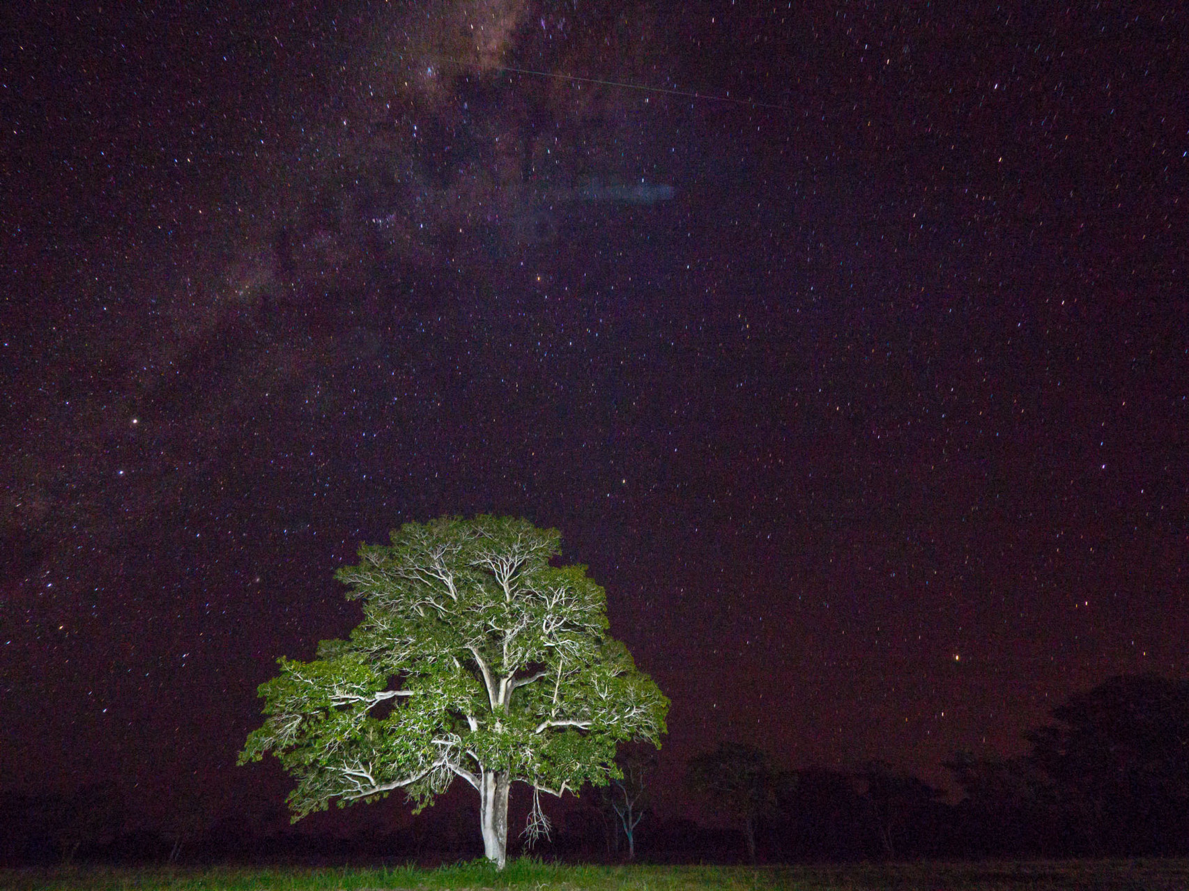 Pantanal in a pitch black night with an incredible sky panorama (shutter speed 60s, tree 5s manually illuminated with a small torch)