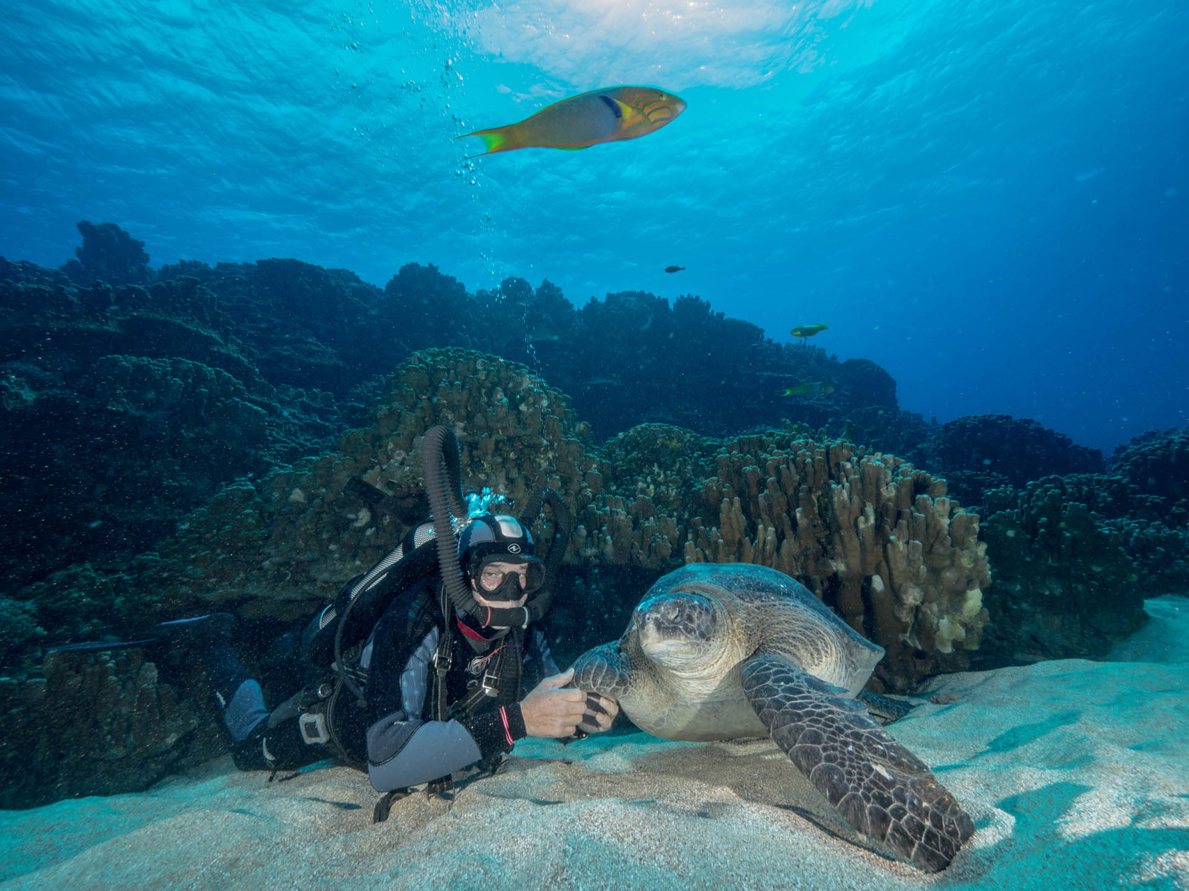Diver with tame turtle, Easter island [Chile, 2014]