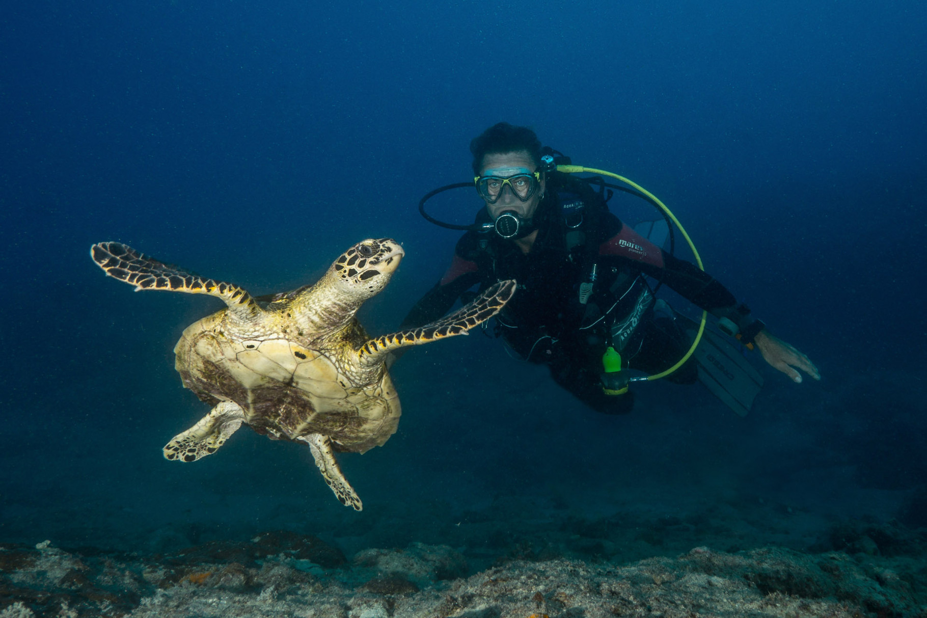 Diver with turtle, Hienghene [New Caledonia, 2014]