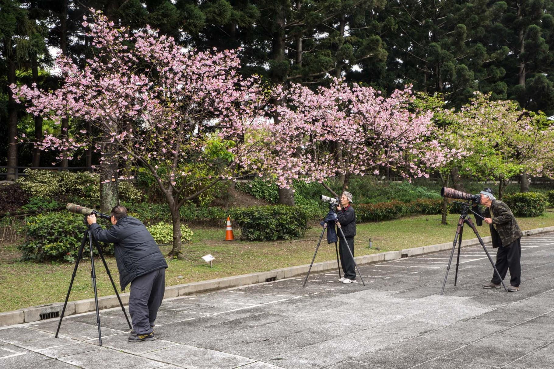 Cherry blossom photographers ;-)