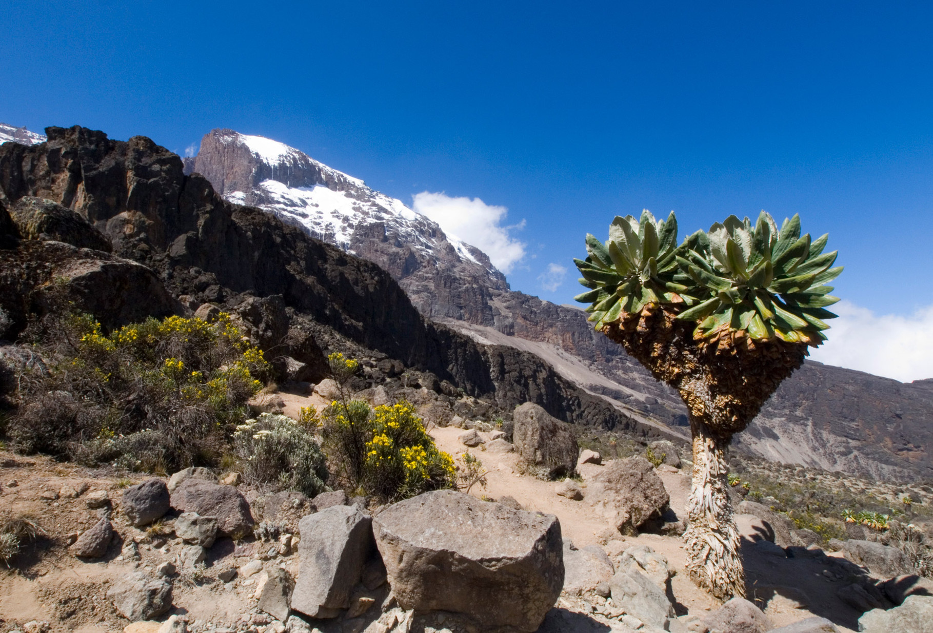 Kilimanjaro, 2012