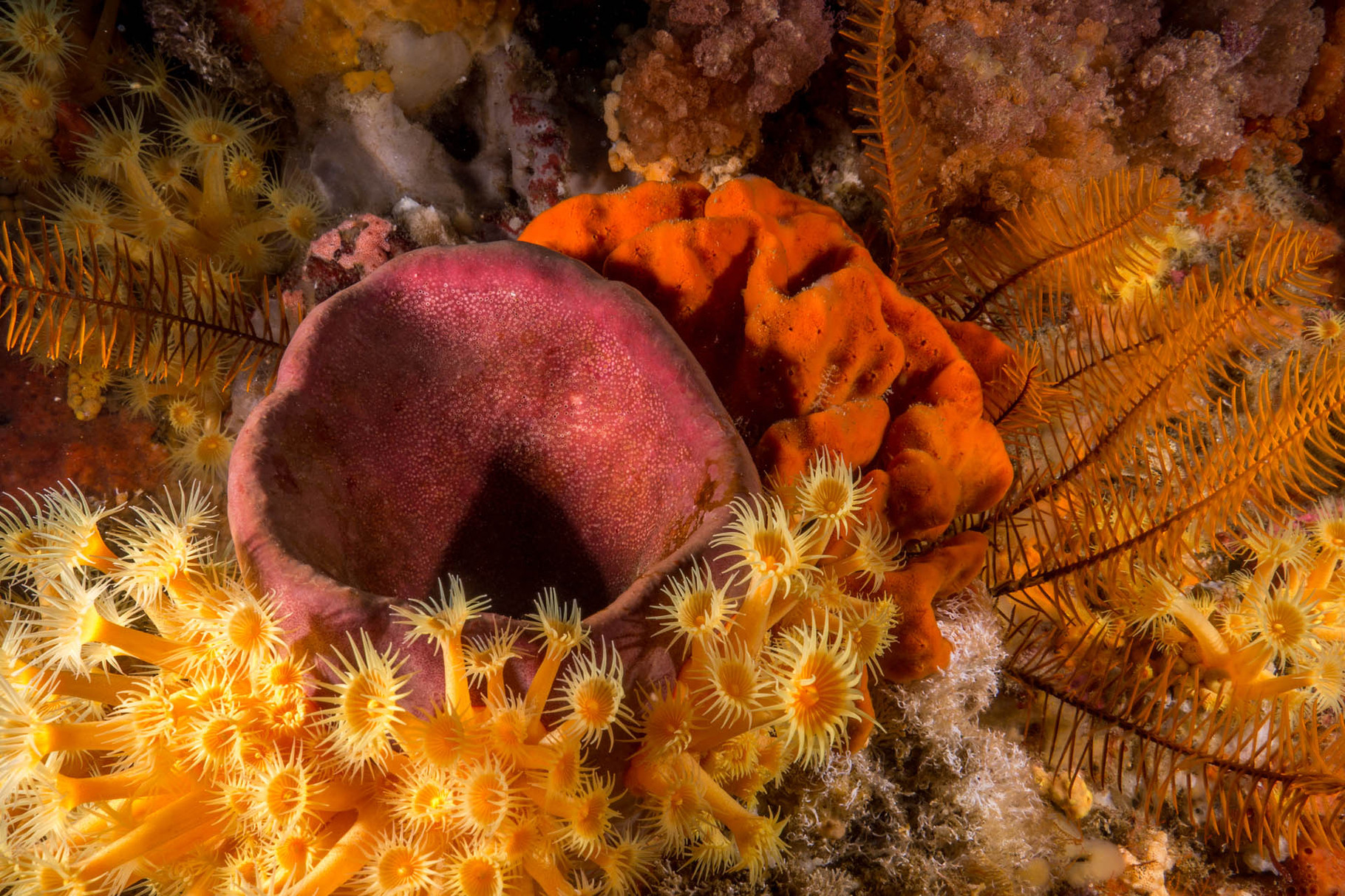 Colorful sponges and anemones