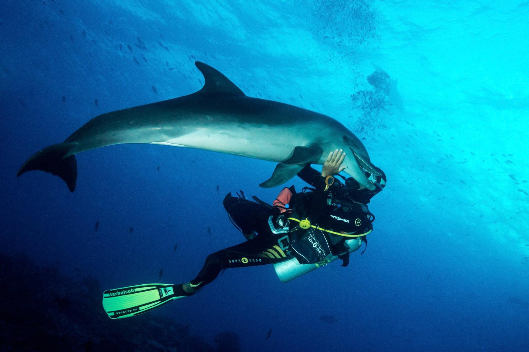 Bottlenose dolphin (Tursiops), Tiputa Pass, Rangiroa