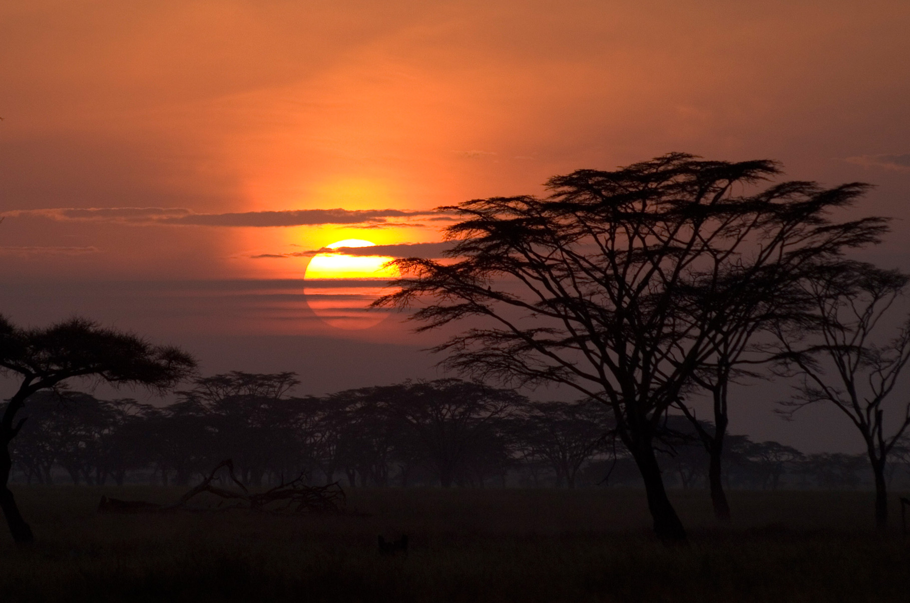 Sunset, Serengeti, 2012