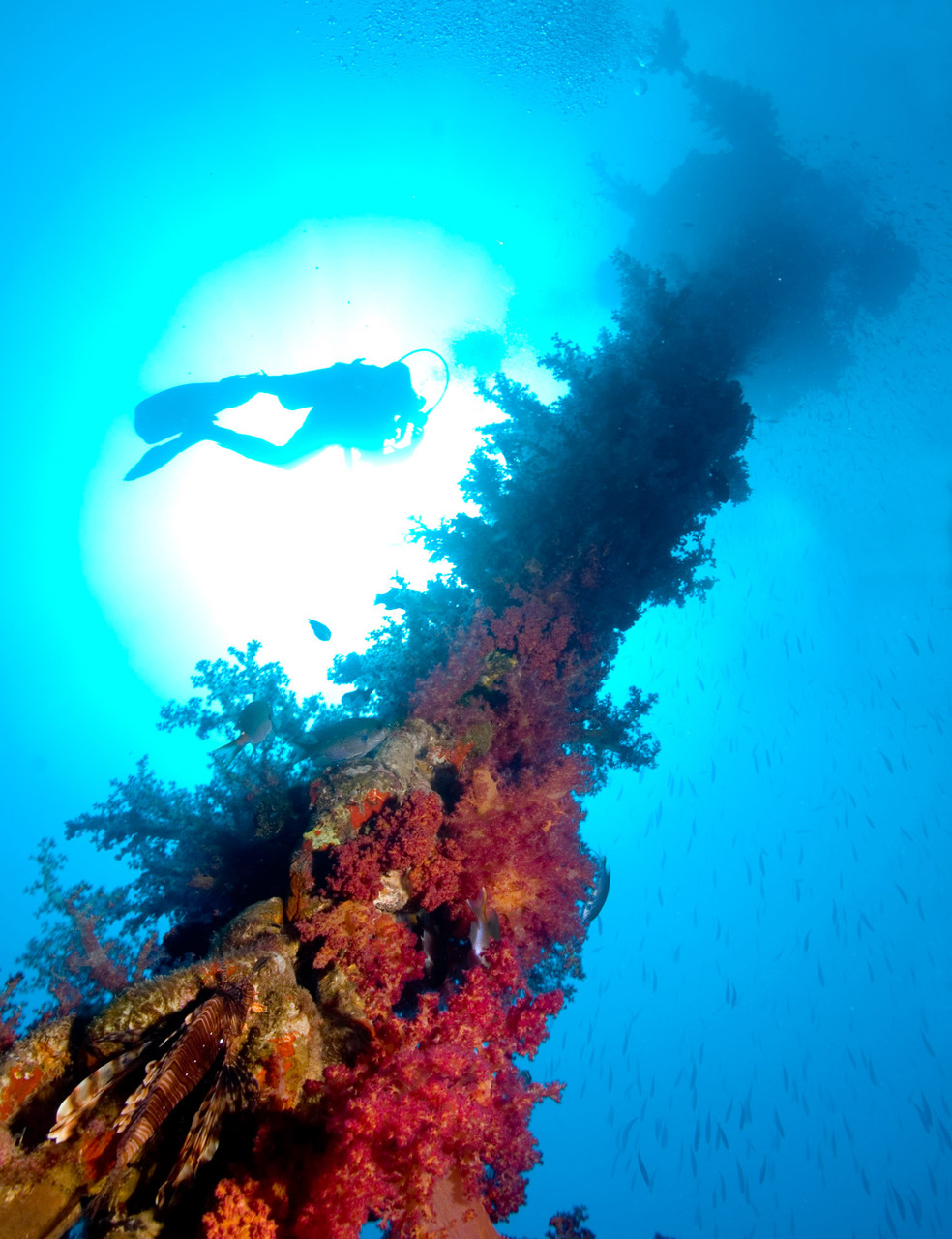 Divers ascending at the Buoy