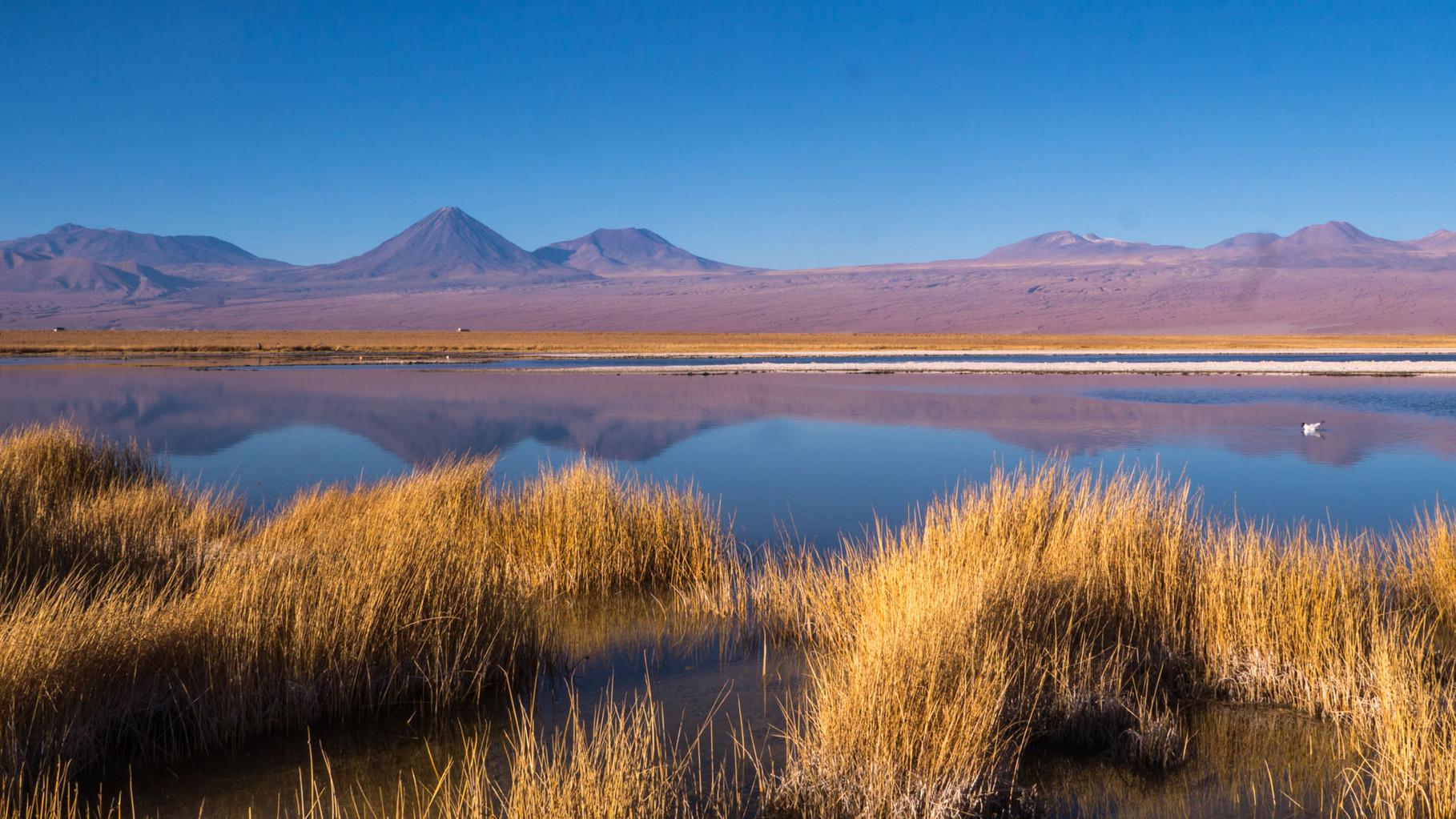 Laguna Cejar (extremely saturated saltwater, similar to dead sea), near San Pedro de Atacama [Chile, 2014]