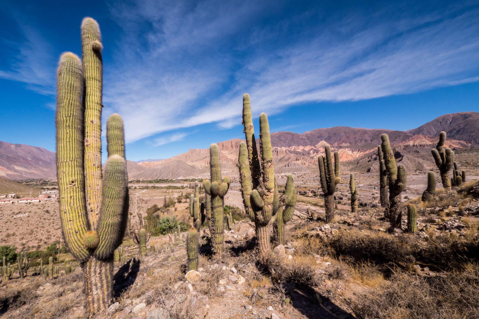 National park Los Cardones (cactus), near Cachi, Argentina
