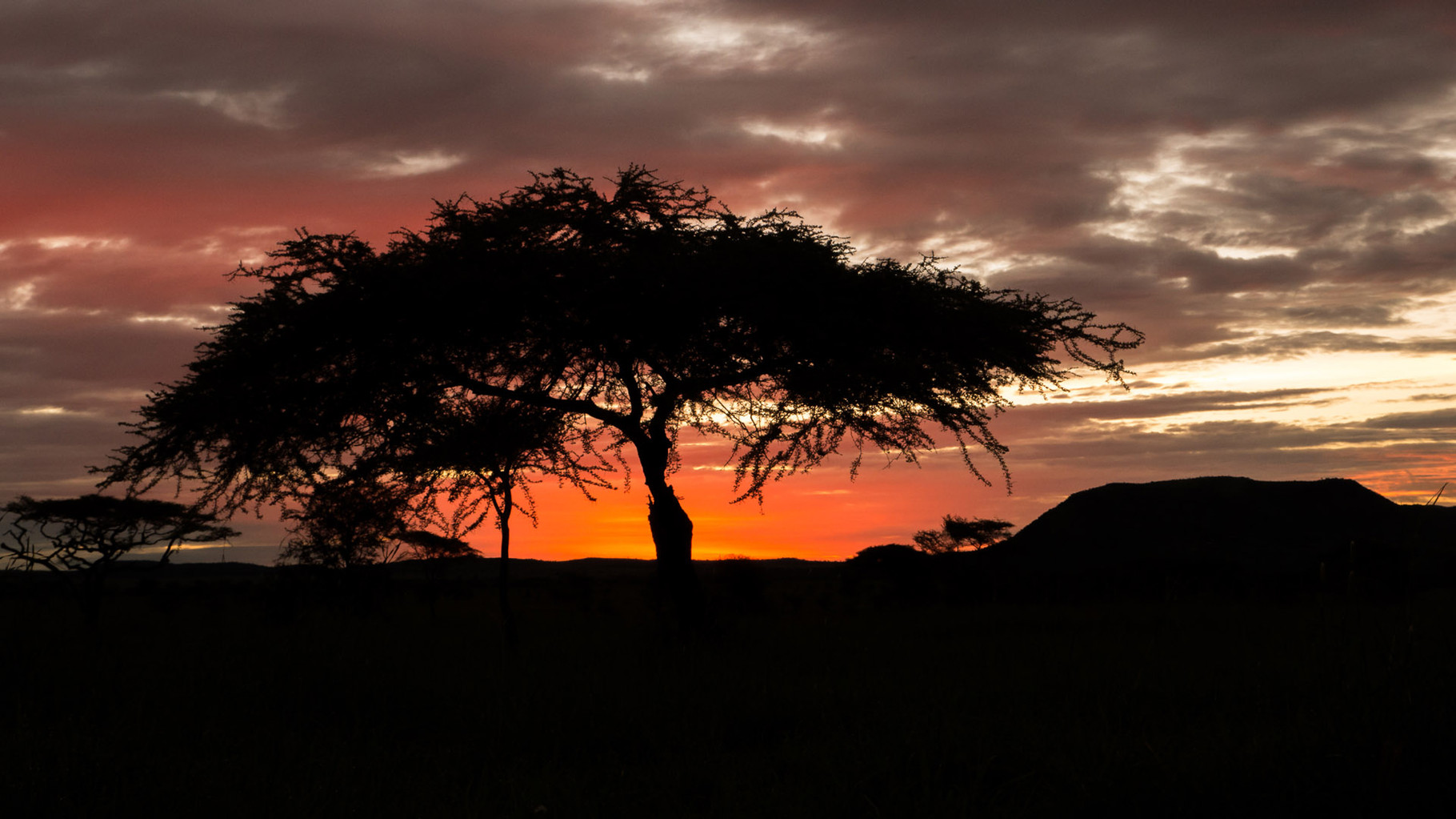 Sunset, Serengeti, 2015