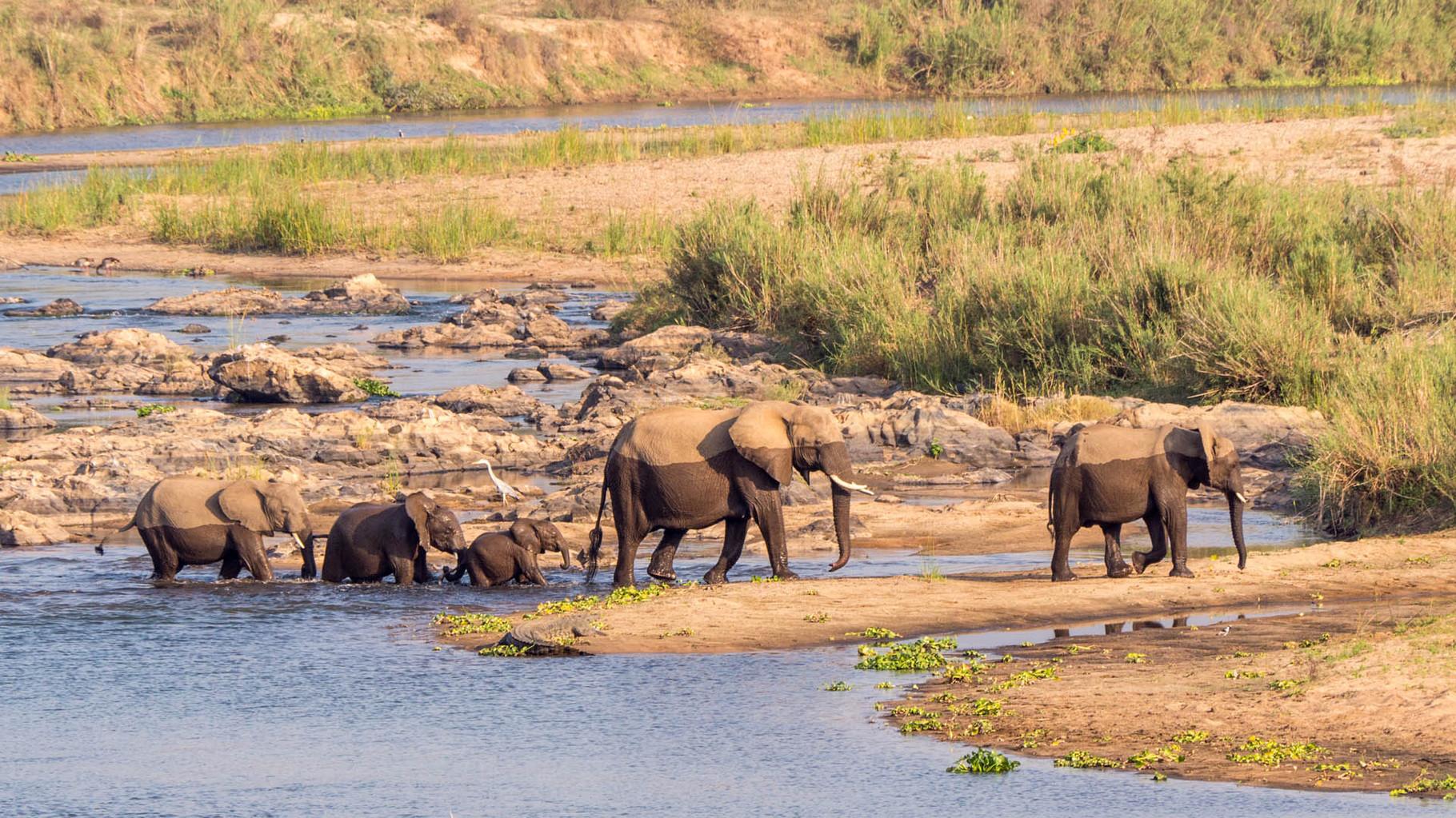Elefants [Kruger Park, South Africa, 2015]