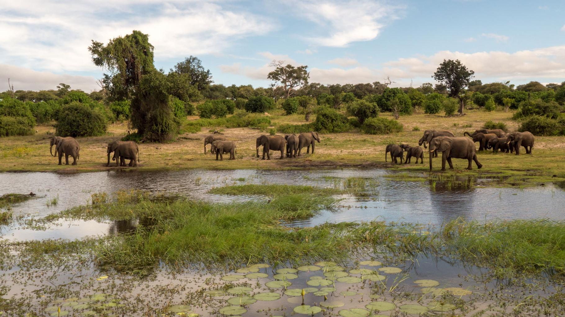Elefants [Chobe Park, Botswana, 2015]