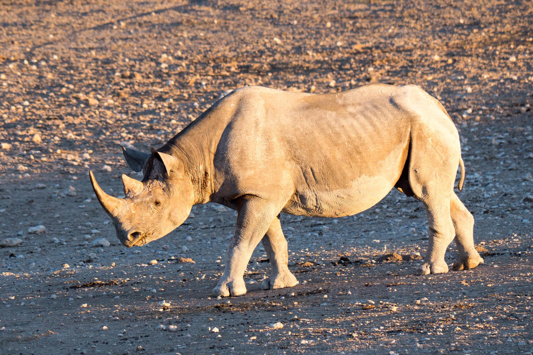 Rhino [Etosha Park, Namibia, 2015]