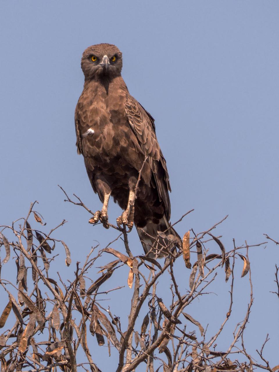 [Kruger NP, South Africa, 2015]