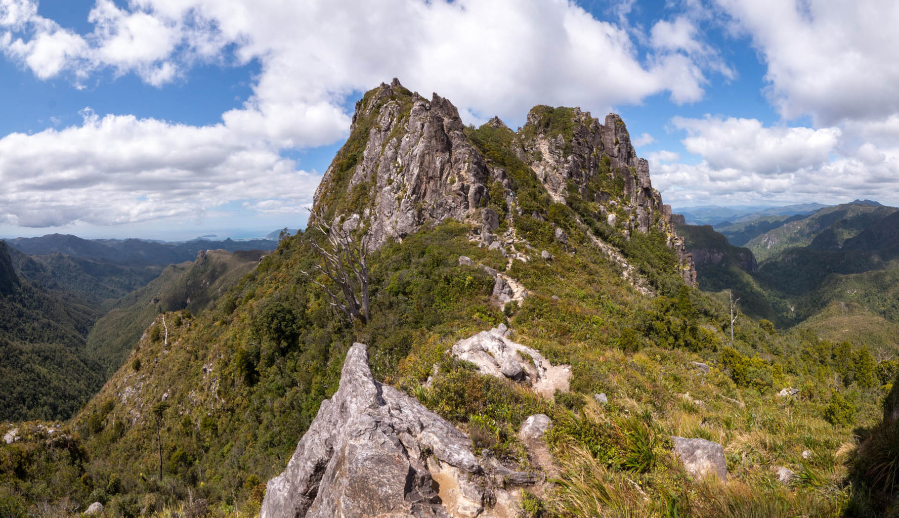 Coromandel Forest Park - Pinnacles