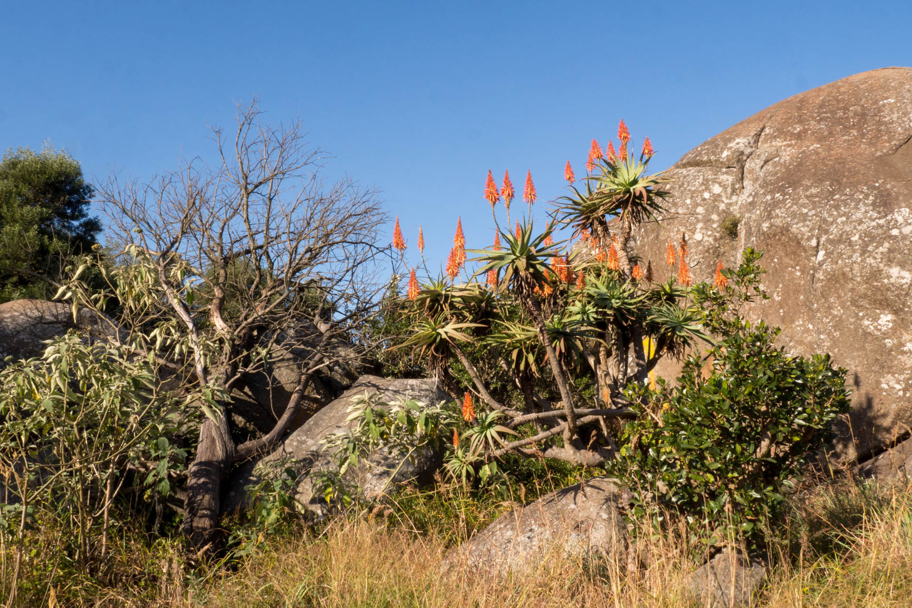 Vegetation in Swazilands Highlands