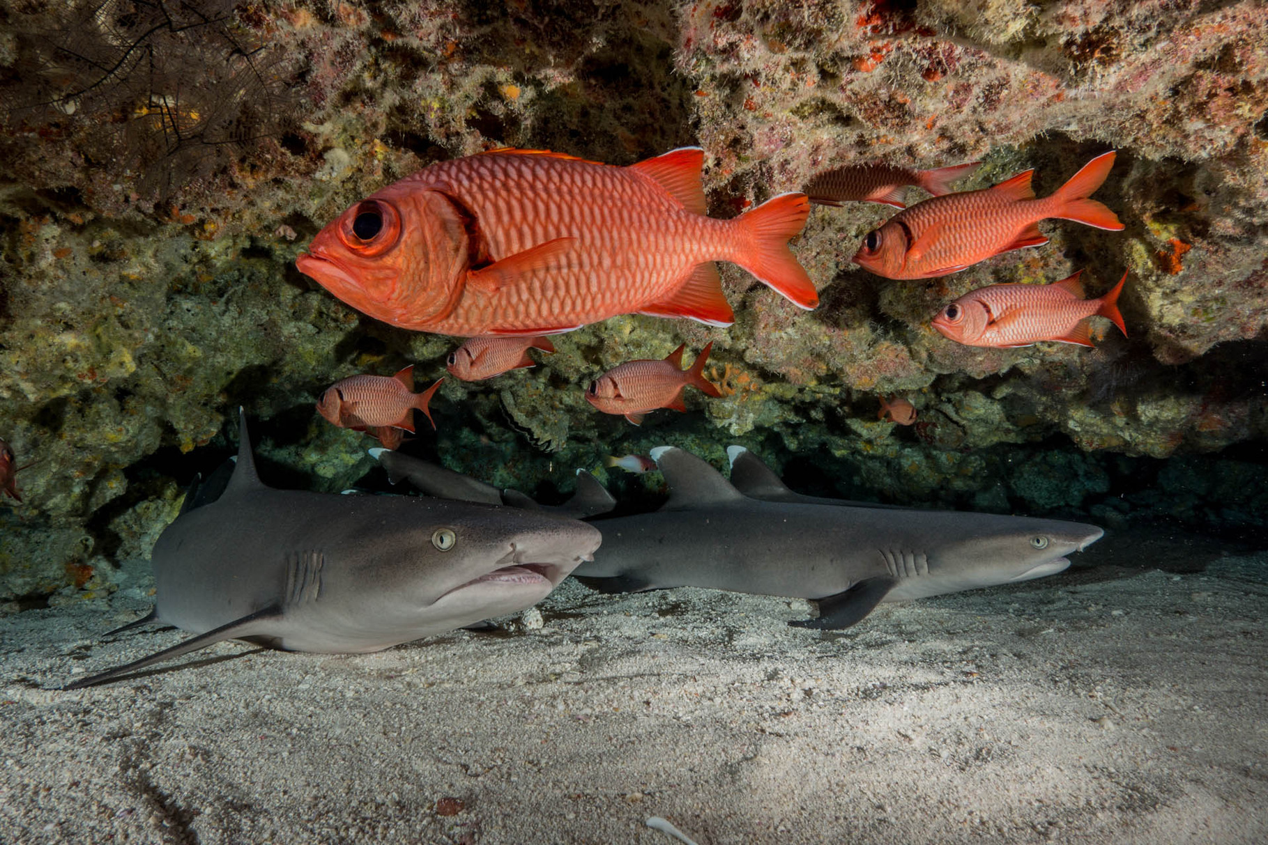 Nurse sharks, North Pass (Canyons), Fakarava