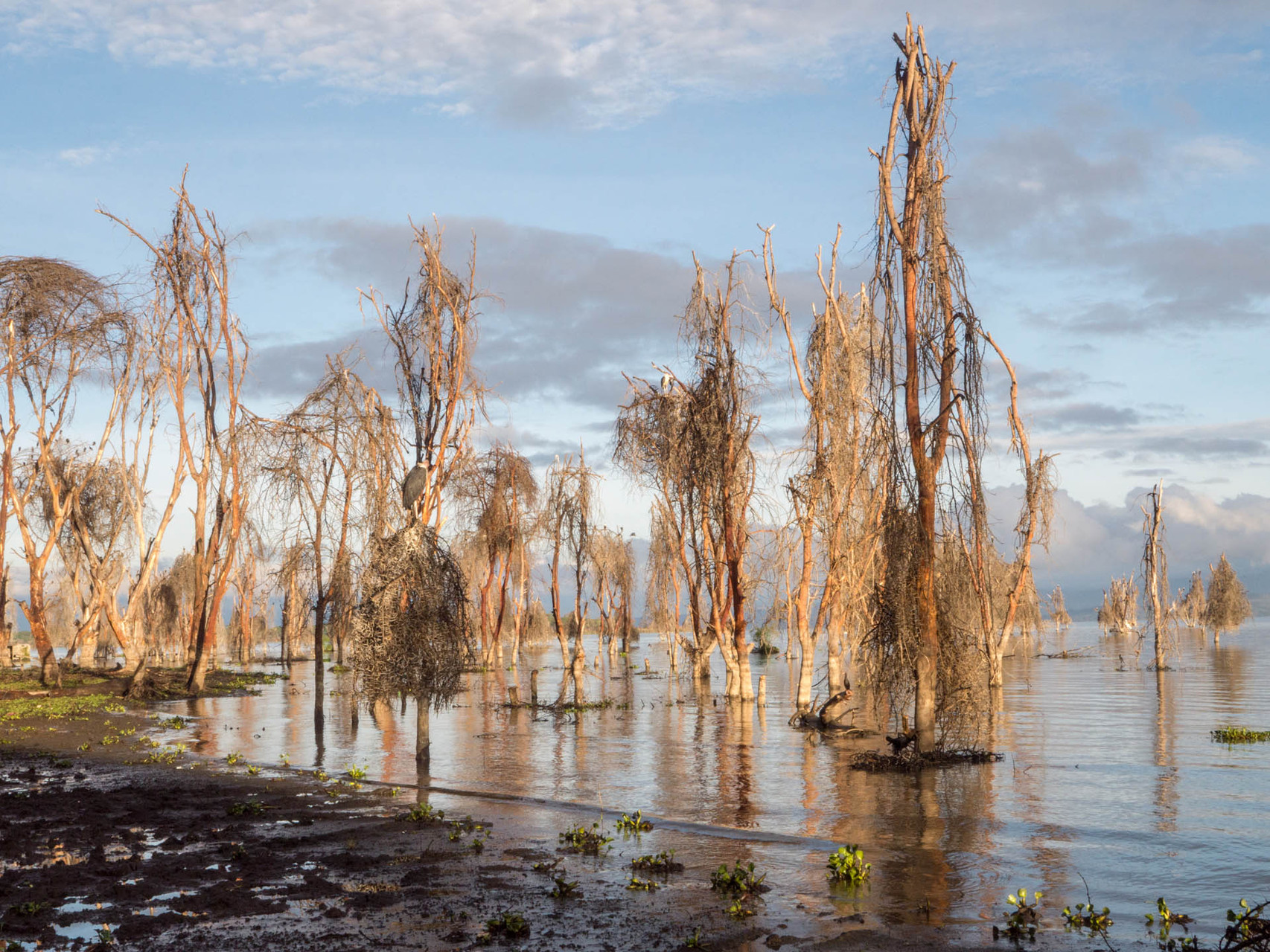 Dead trees at Lake Naivasha