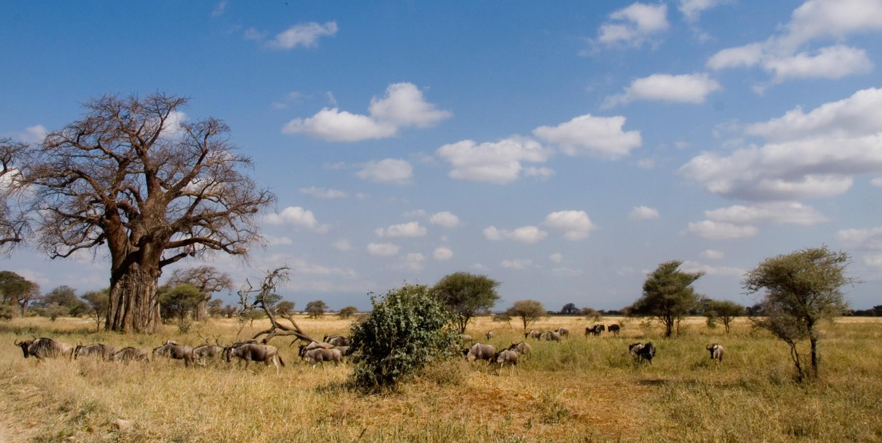 Scenery [Serengeti, Tanzania, 2012]