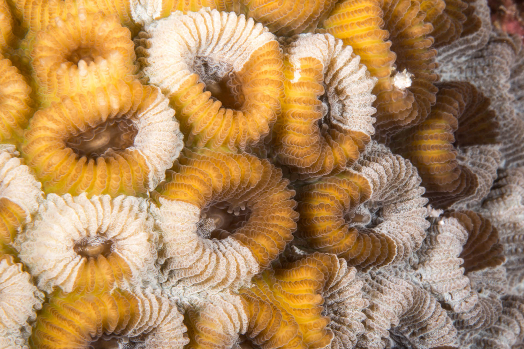Hard corals, Zamami Island