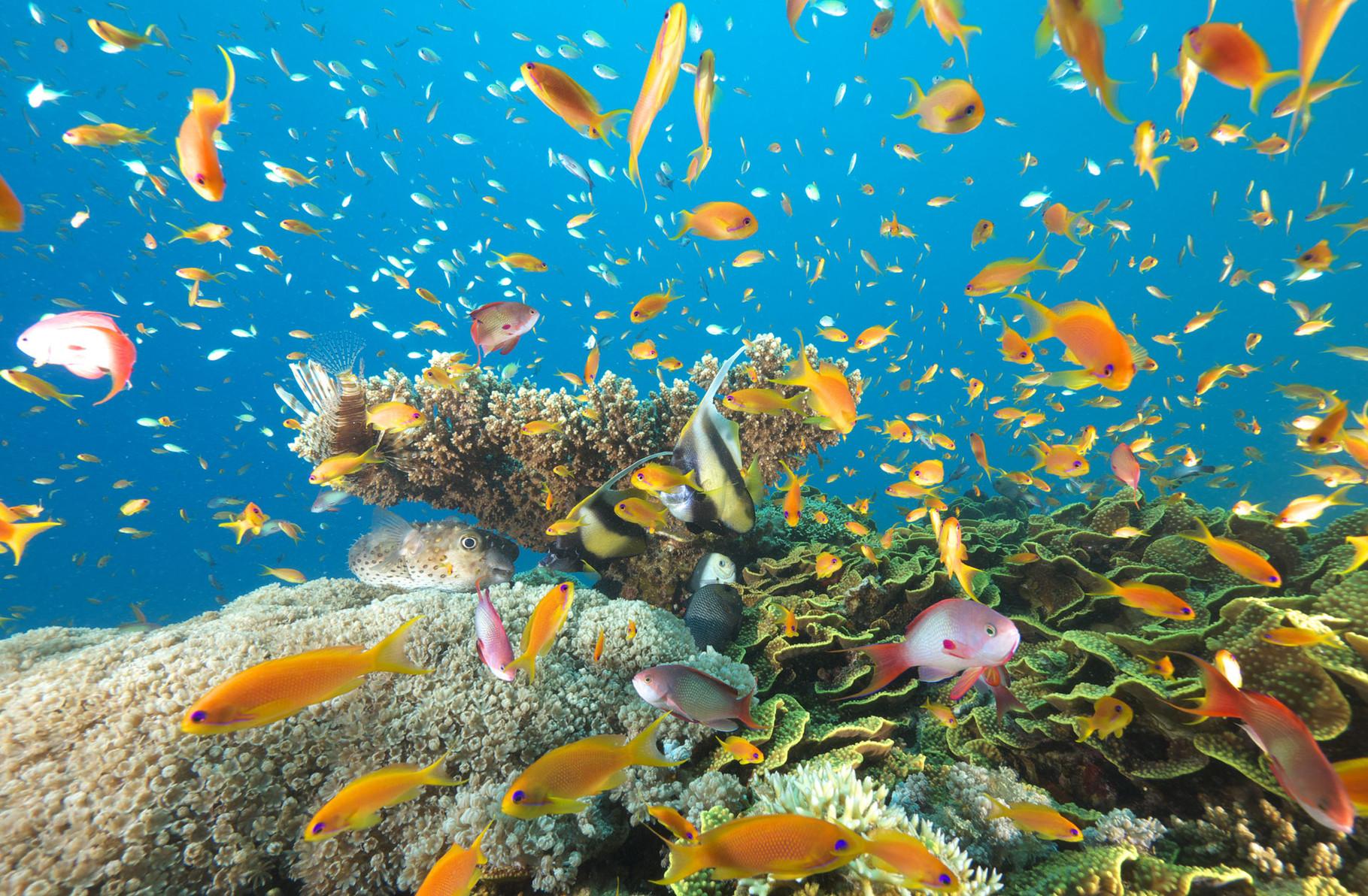Lively underwater scenery