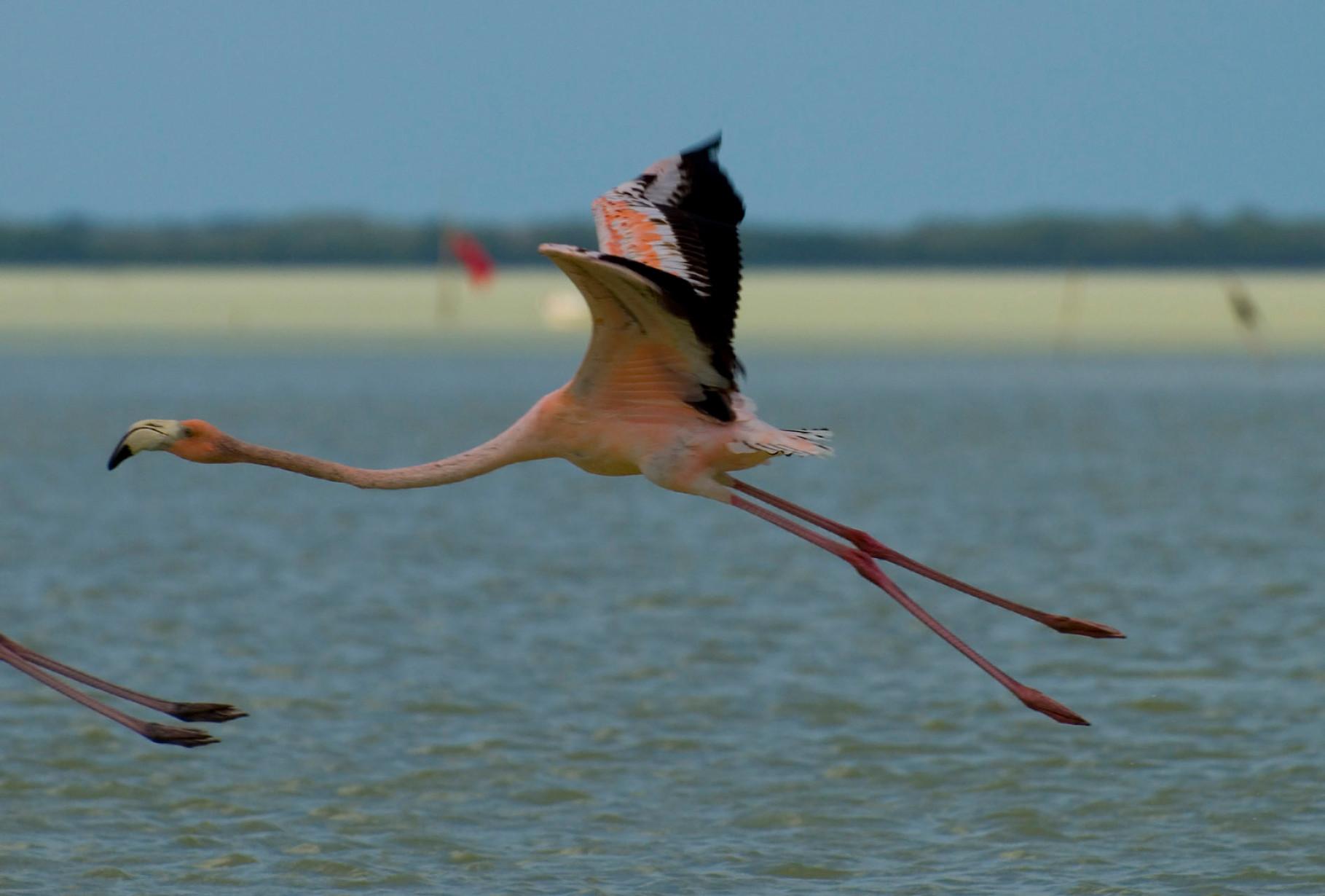 Flamingo [Mexico, 2009]