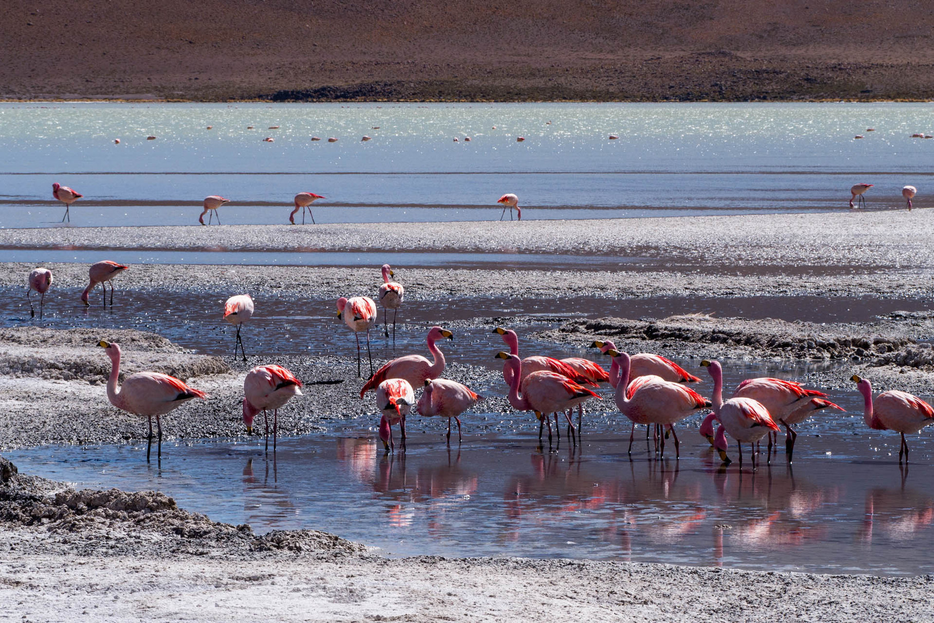 Laguna Hedionda with hundreds of Flamingos [Bolivia, 2014]