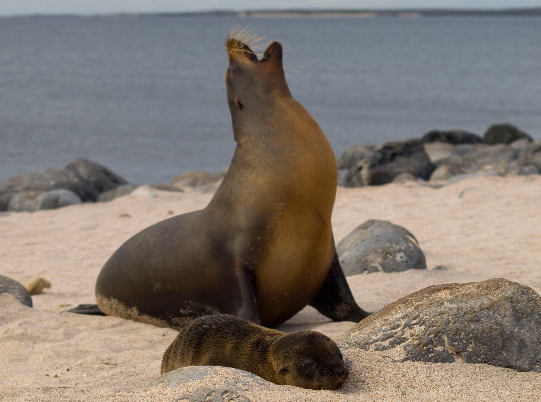 Sea Lions [Galapagos, Ecudor, 2009]