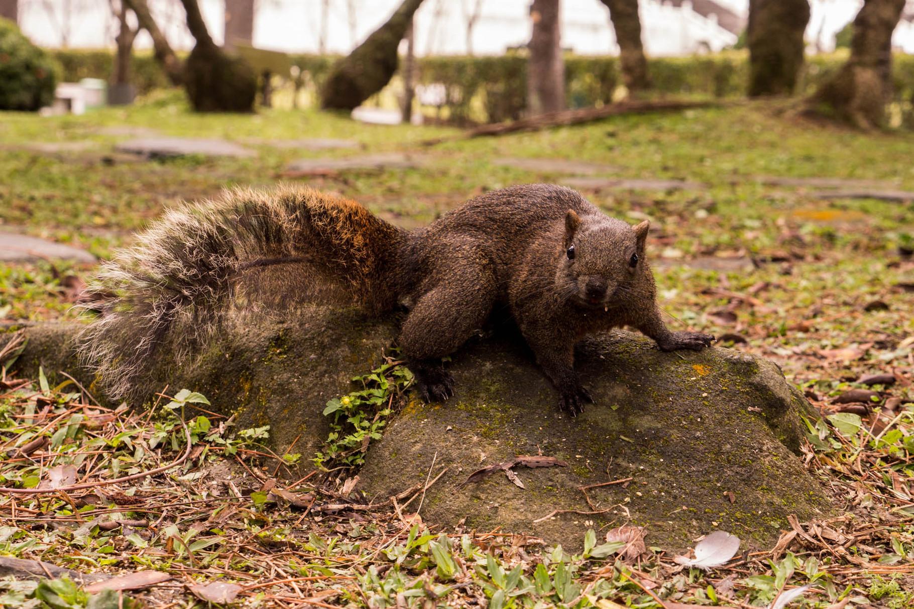 Fearless squirrels at Chiang Kai-shek Memorial Hall park