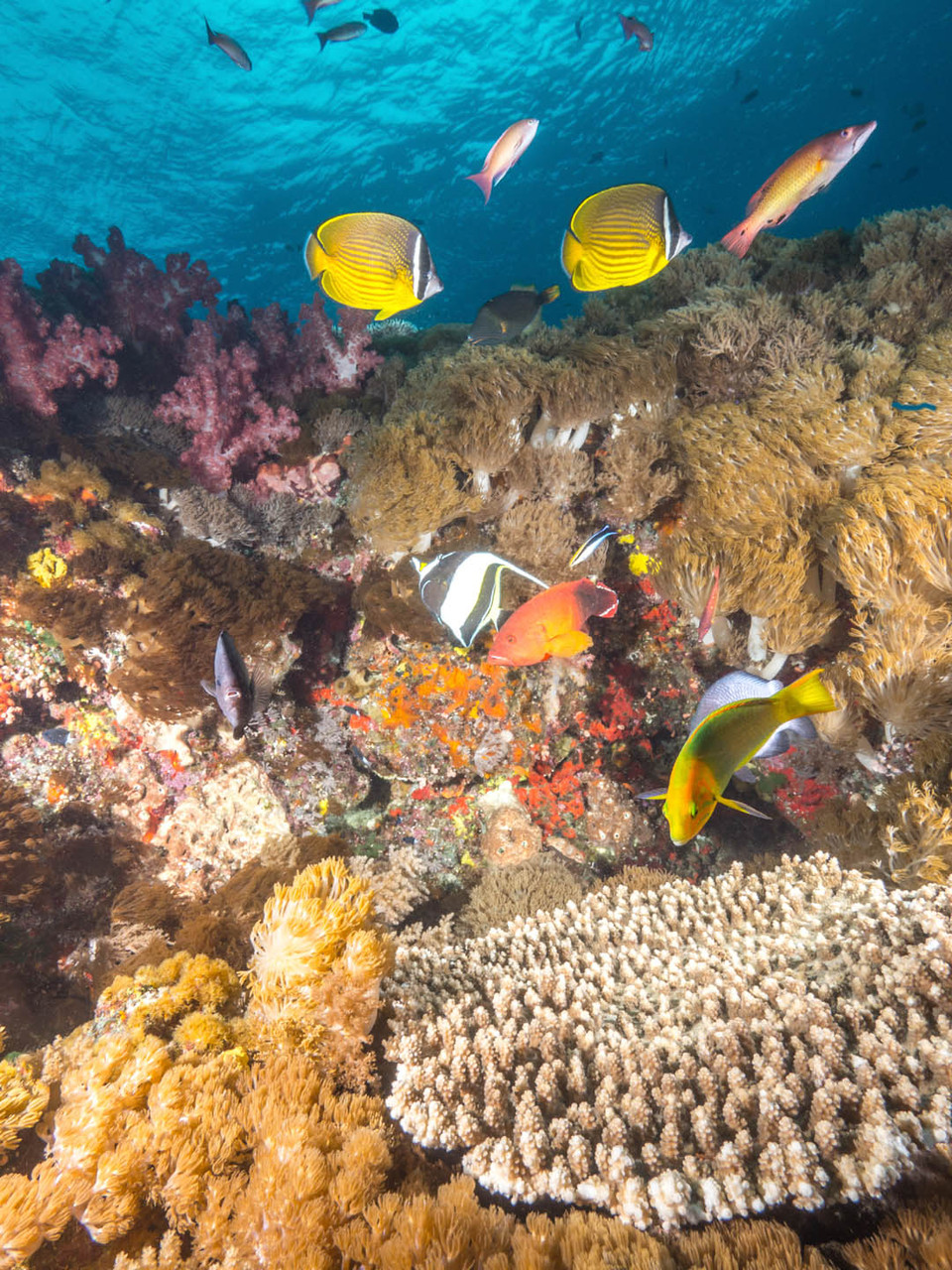 Seascape with various reeffishes, Green Island