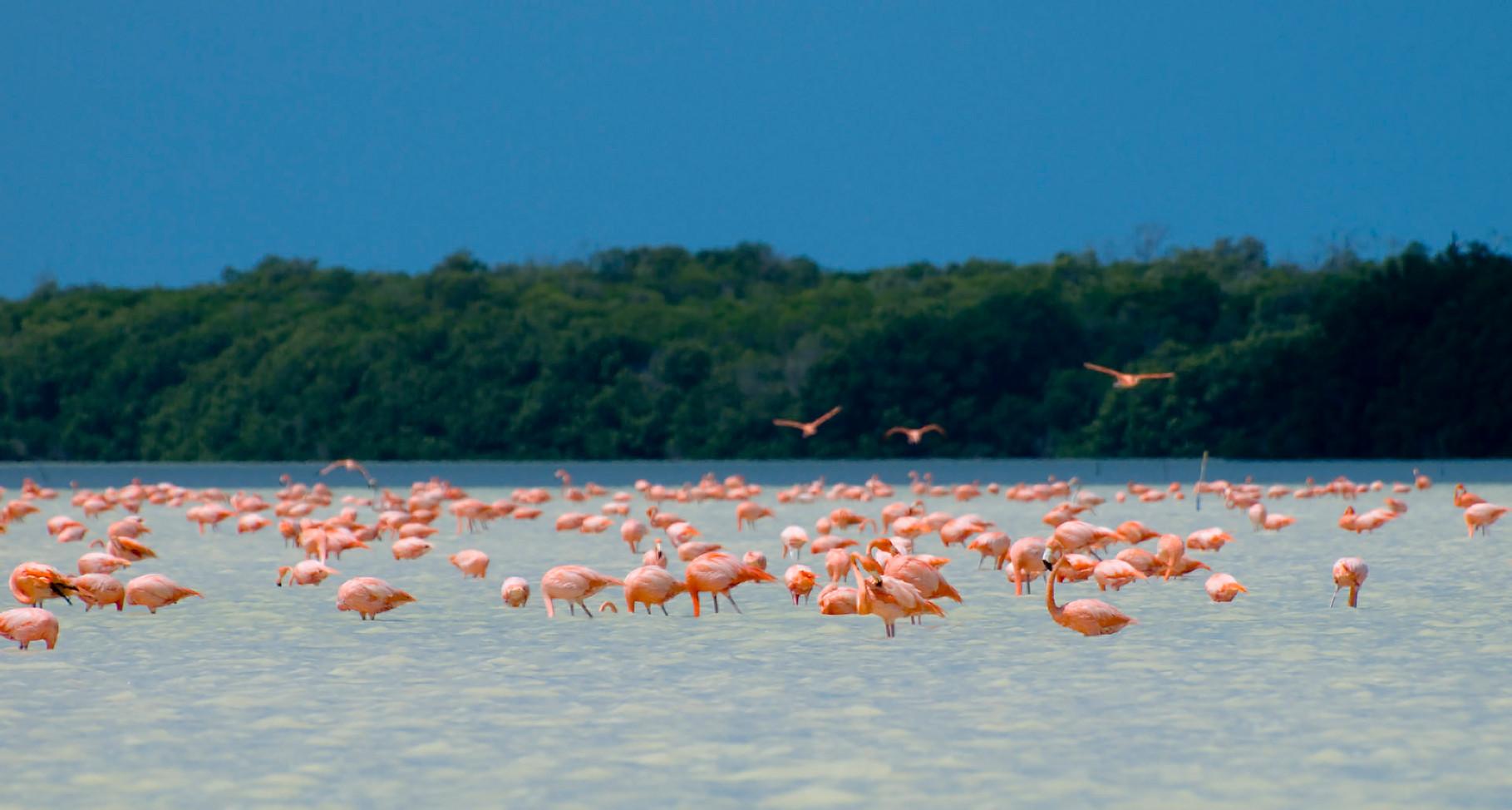 Flamingos [Mexico, 2009]