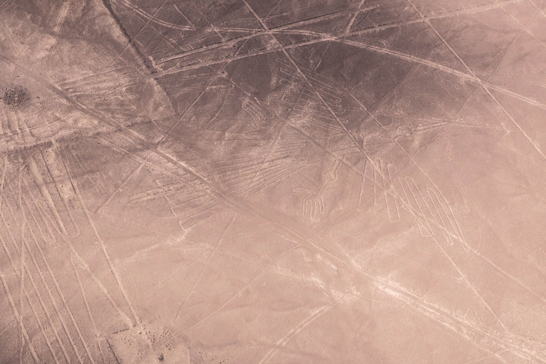 Nazca lines: Condor