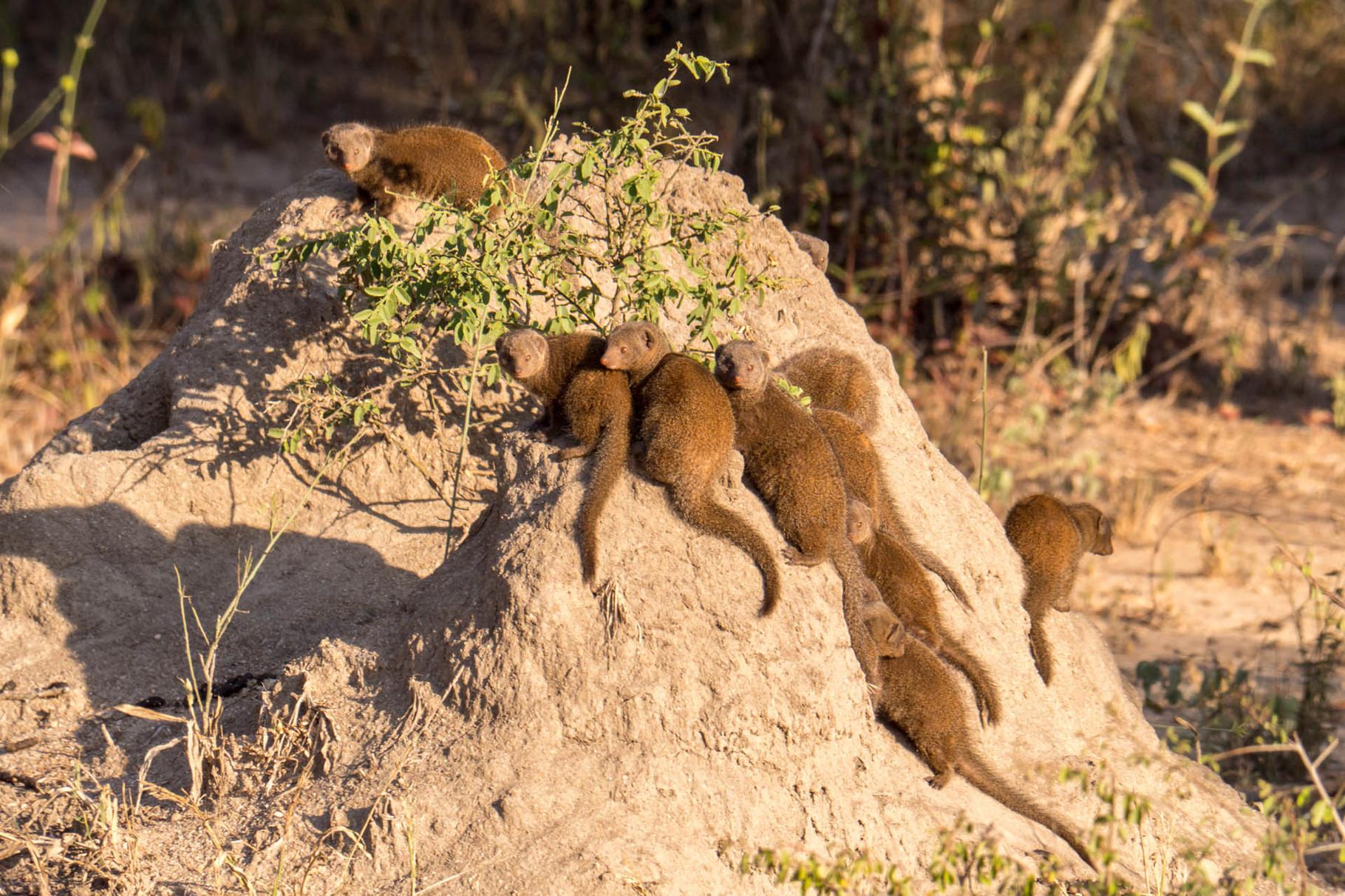 [Kruger Park, South Africa, 2015]