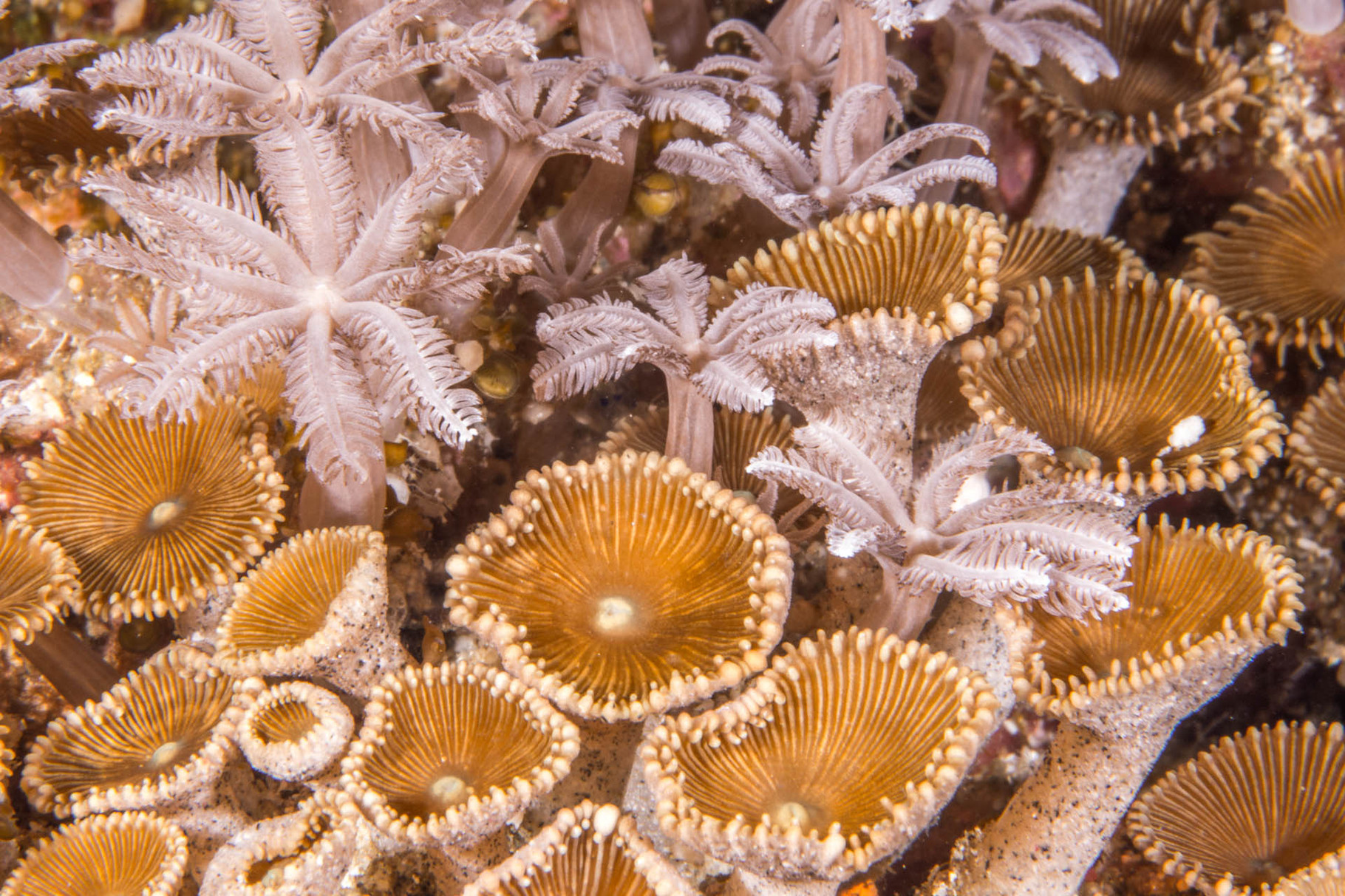 Close-up of corals, Green Island
