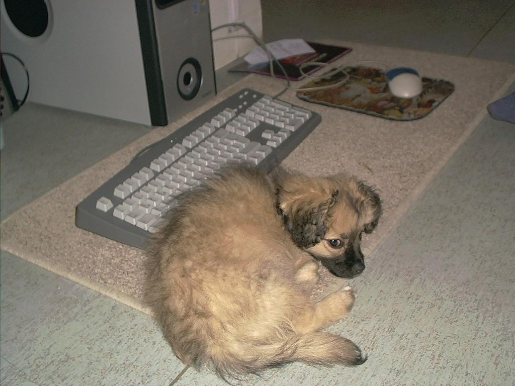 So, nun muss sie mit mir spielen, anstatt im Internet herum zu googeln!