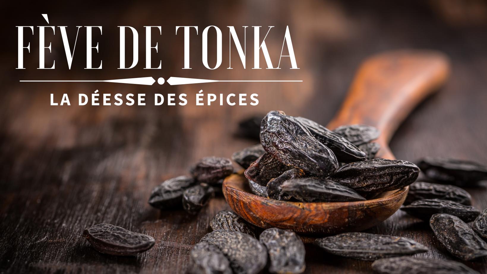 La fève Tonka : à découvrir de toute urgence !