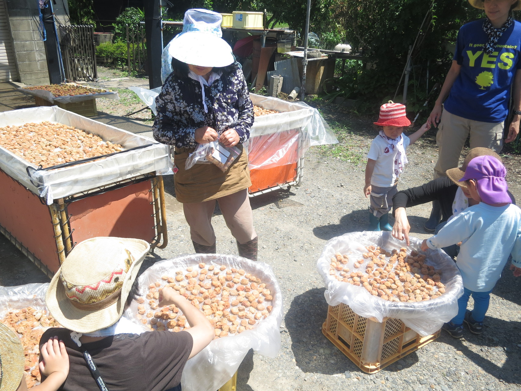 収穫後、角力山さんのご自宅で、梅干しの作り方をレクチャーしていただきました。
