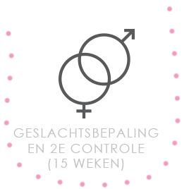 Geslachtsbepaling en 2e controle (15 weken)