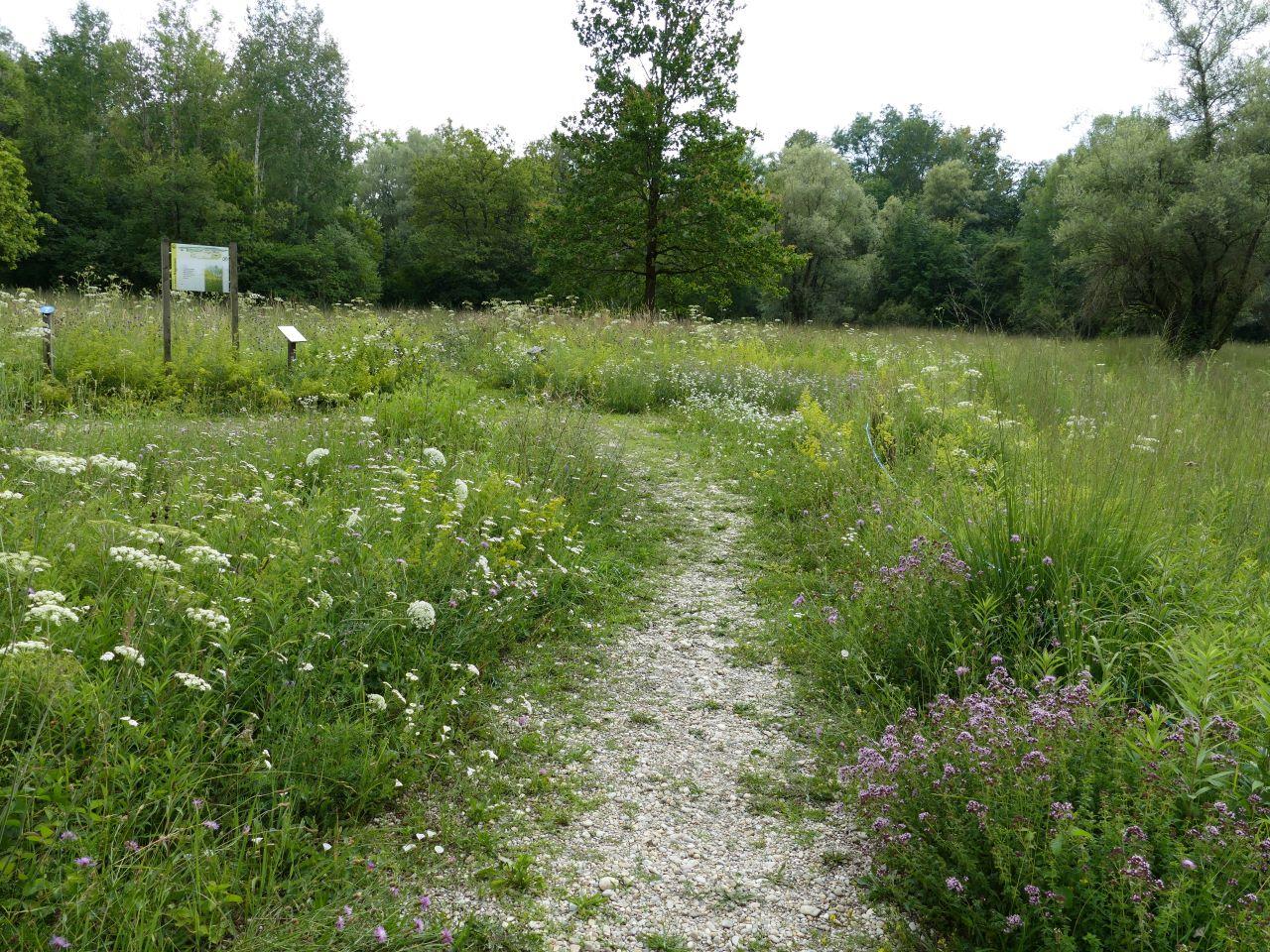 Eine artenreiche Magerwiese ist Lebensraum für eine große Insektenvielfalt