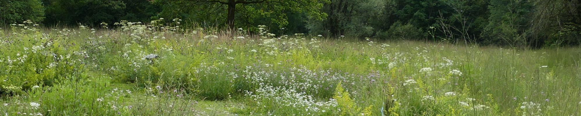 In den Wiesen dürfen Gräser und Blumen wachsen