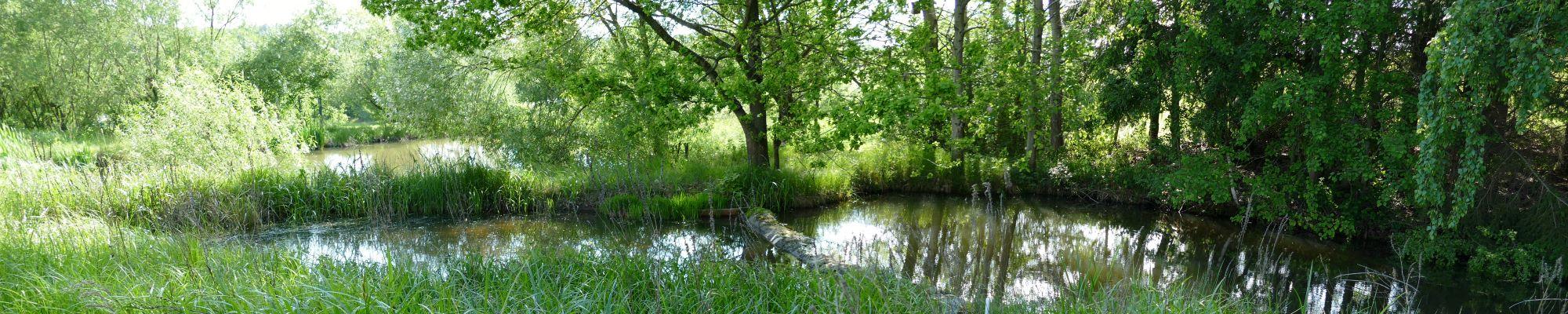 Ein Naturoase im Naturpark Bayerischer Wald