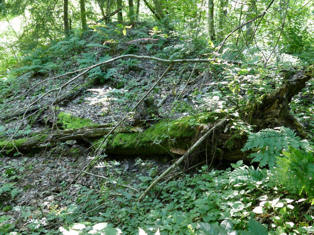 Abgestorbene Bäume werden zu einem neuen Lebensraum