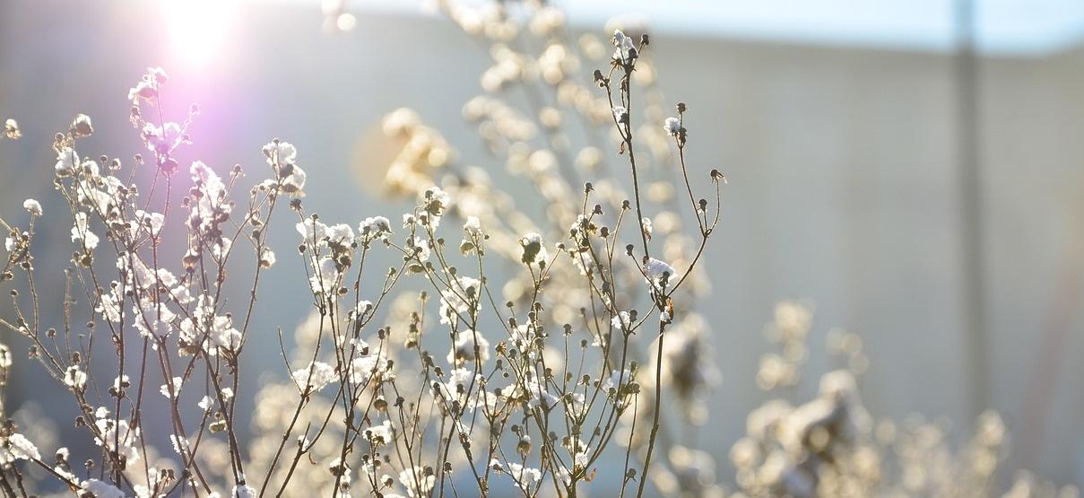 Der Garten Im Februar das kleingarten paradies gartenstadt waltrop