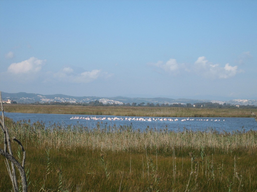 Etang et flamants