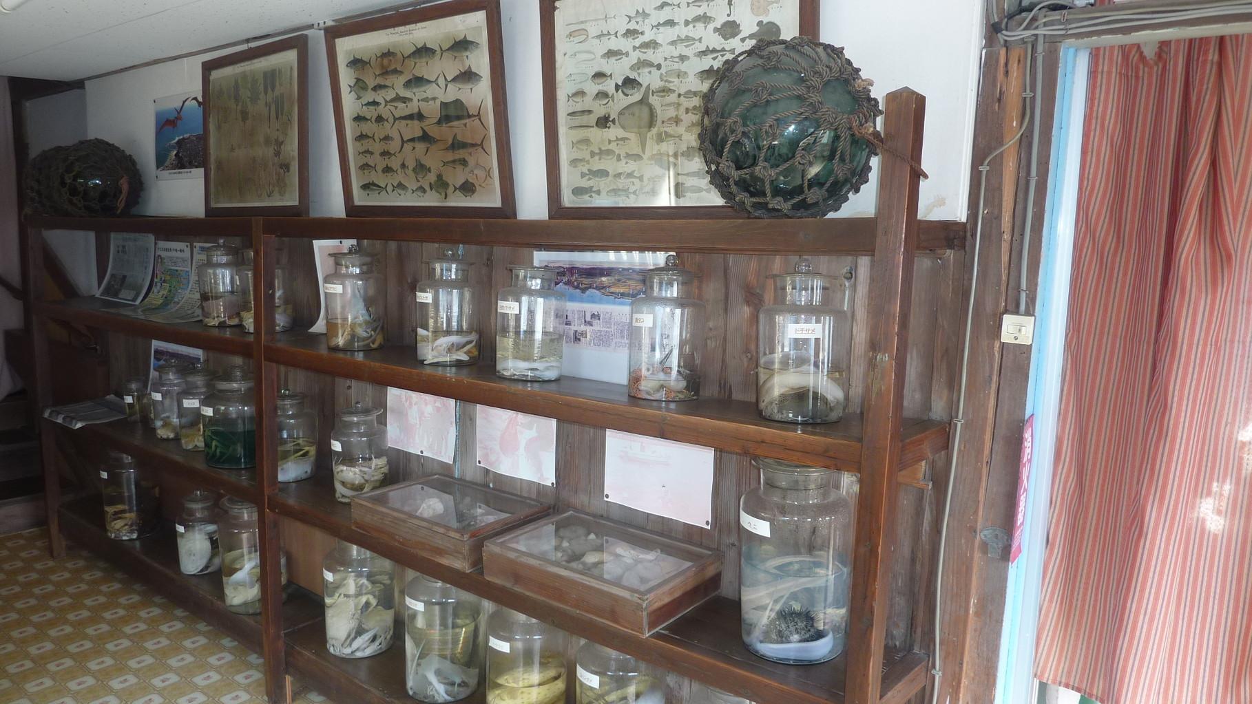 平磯の海の生き物が展示してあります。